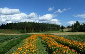 kukkaviljelmät frantsila kuva