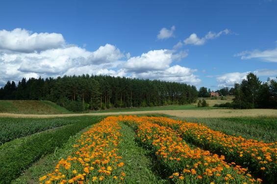 Herb fields.