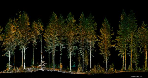 Pistepilvidataa metsästä.