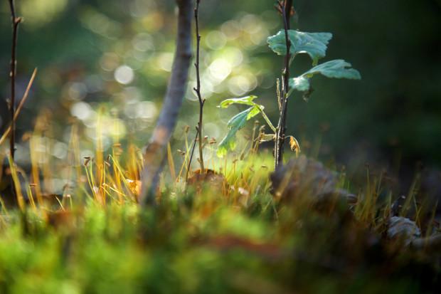 Sammalta metsänpohjalla.
