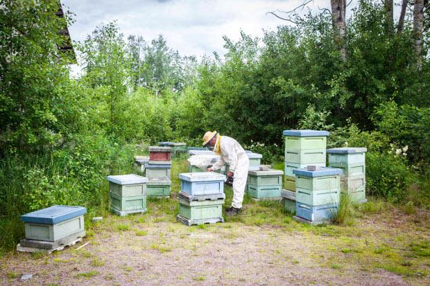 Mies ja mehiläistarha.