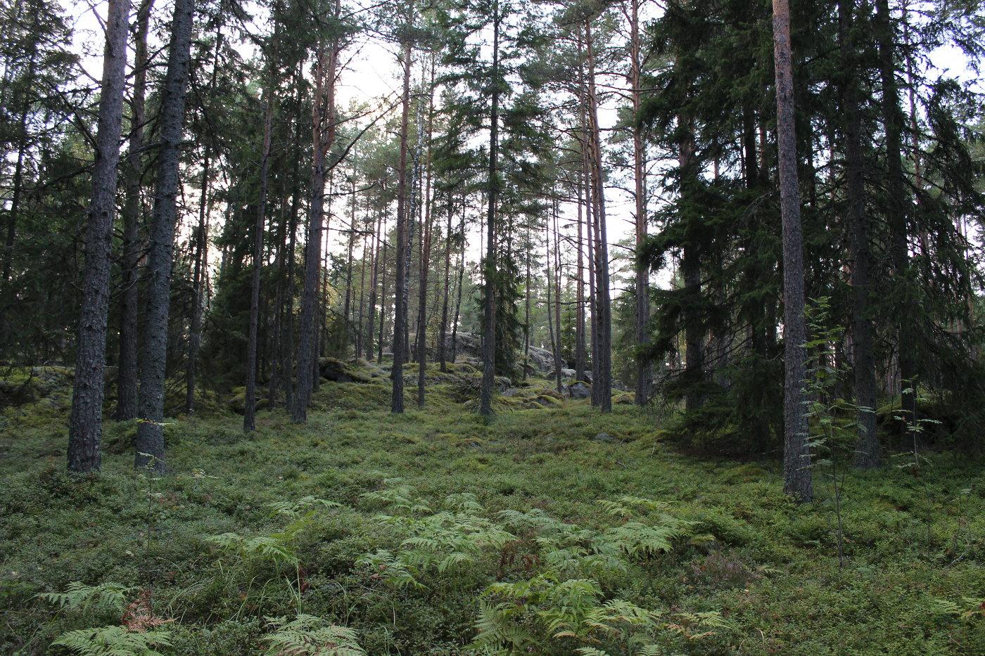 Kivinen metsämaisema.