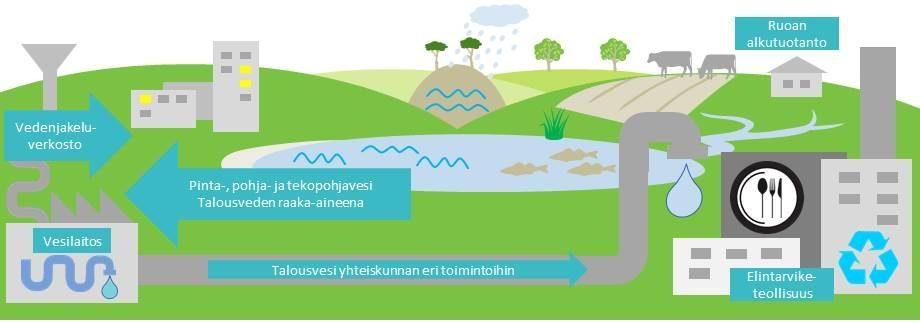 Kaavio veden kulusta vesilaitoksen ja vedenjakeluverkoston kautta ruoan alkutuotantoon ja elintarviketeollisuuteen.