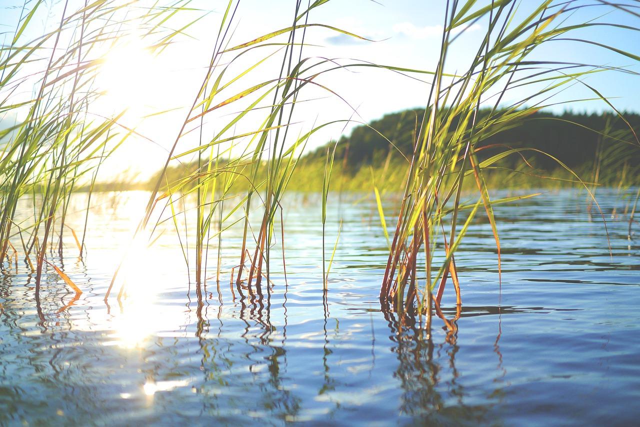 Järven pinta auringossa ja järvikasvillisuutta.