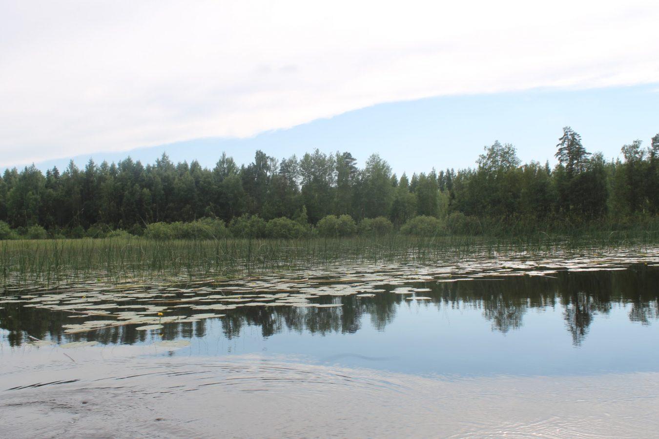 Rehevä järvi.