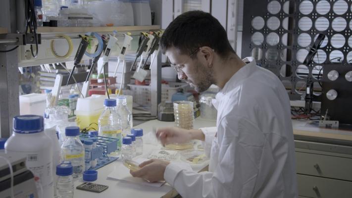Mies laboratoriossa tutkimassa petrimaljaa.