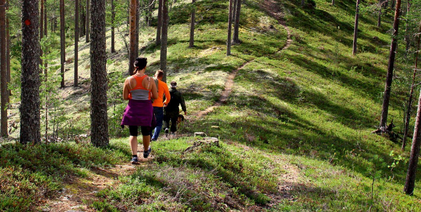 Kolme aikuista ja koira kävelevät peräkkäin valoisalla metsäpolulla.